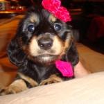 Puppy Models 005